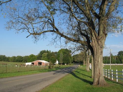 Black walnut trees on September 20